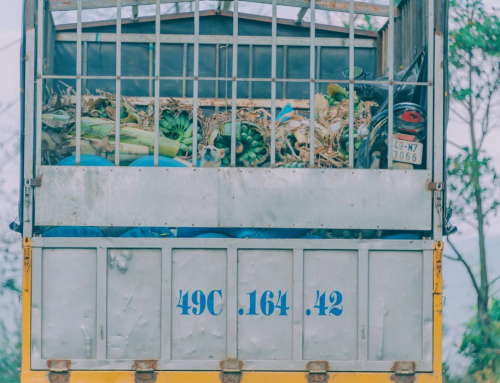 How Successful is Rubbish Removal When it Comes to Ceasing Hoarding Habits?