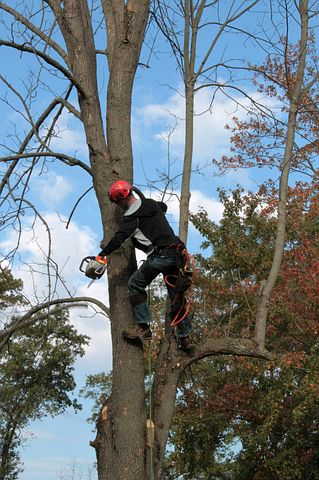 Tree specialist while doing a tree inventory